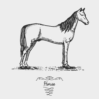 馬が刻まれた、木版画ったらスタイル、ビンテージ描画種の手描きイラスト。