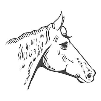 Иллюстрация головы лошади изолированная на белой предпосылке. элемент для логотипа, этикетки, эмблемы, знака, плаката, футболки с принтом. иллюстрации.