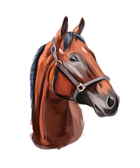 Портрет головы лошади из разноцветных красок всплеск акварели цветной рисунок реалистичный