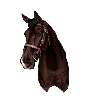 水彩絵の具のスプラッシュから馬の頭の肖像画色の描画塗料のベクトル図