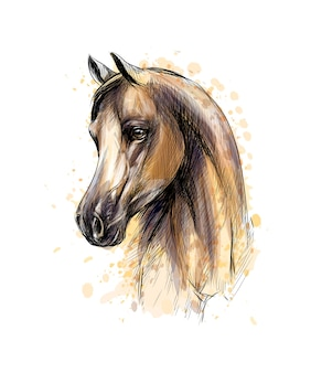 수채화의 스플래시에서 말 머리 초상화입니다. 손으로 그린 된 스케치. 그림 물감