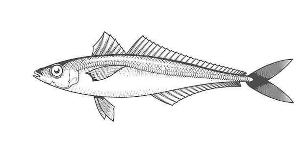 Horse mackerel isolated on white