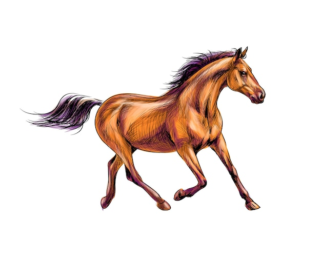 말은 수채화의 스플래시에서 갤럽을 실행합니다. 손으로 그린 된 스케치. 그림 물감