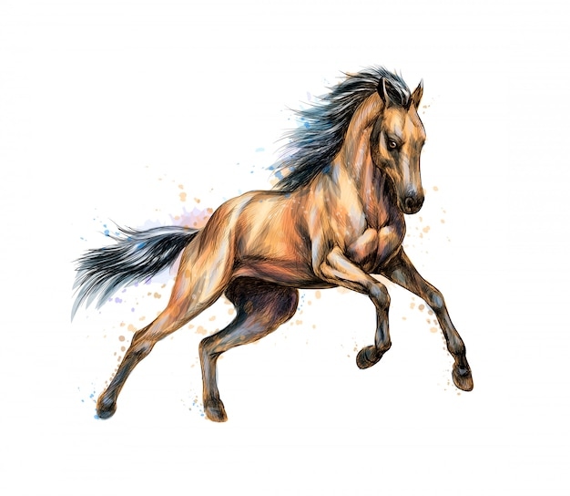 Horse run gallop from splash of watercolors. hand drawn sketch.  illustration of paints