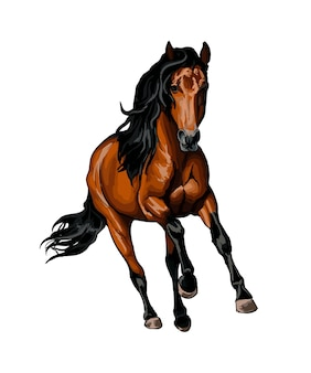 リアルな水彩画のスプラッシュからギャロップで走っている馬