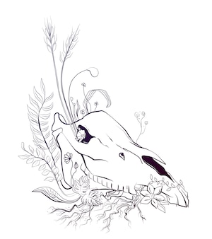 Horse skull black line sketch