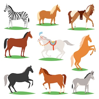 Horse vector animal of horse-breeding or equestrian and horsey or equine stallion illustration animalistic horsy set of pony zebra and donkey character isolated on white background