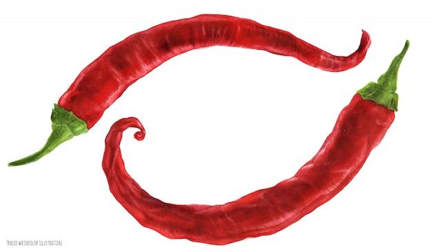 Острый красный свежий кайенский перец чили, акварель
