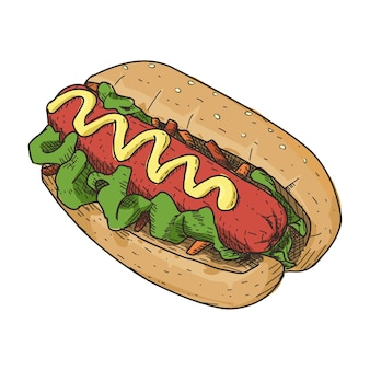 Hotdog in vintage hand drawn style.  ready to use in any need.