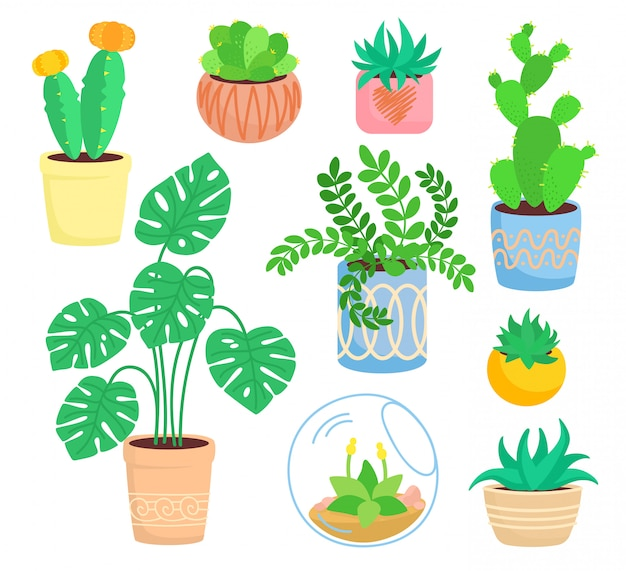 Домашнее комнатное растение, керамика в горшке, плоский мультяшный цветок. суккуленты и комнатные растения, коллекция кактусов, монстера, алоэ