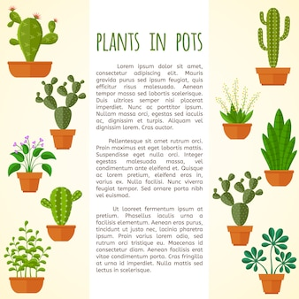 House plant and cactus  brochure page template.