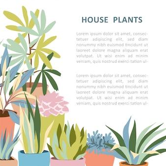 House plant frame