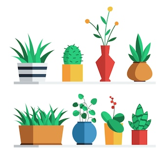 House plants and flowers in colored pots on the shelf for home or office interior decoration.
