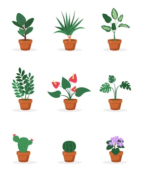 냄비에 집 식물
