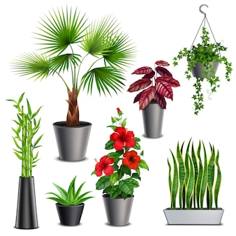 House plants realistic set with hibiscus succulents ivy hanging pots fan palm bamboo stalks vase
