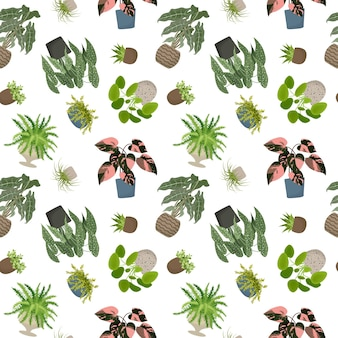House plants seamless pattern flowers in pot vector illustration isolated on white background