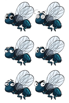 Houseflies with different emotions
