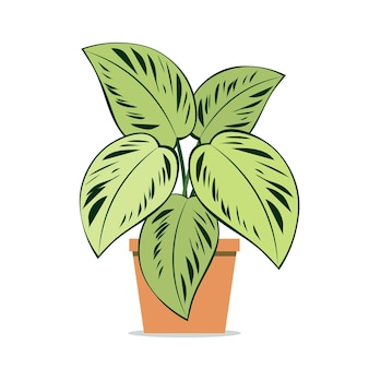 Houseplant aglaonema potted plant on an isolated background