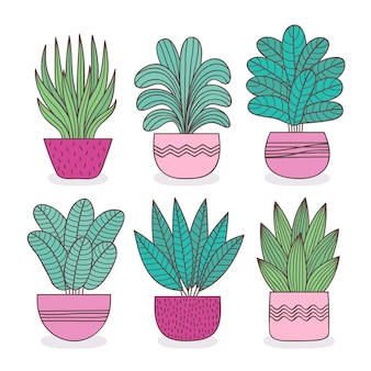 Houseplant collection illustration