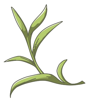 Houseplant or exotic tropical botanical plant decoration. isolated ornamental flora. shrub with long leaves and foliage. branch or lush bush, botany decor for home or office. vector in flat style