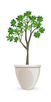 大きな白い花瓶の観葉植物。鉢植えの木