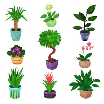 관엽 식물 세트, 식물 및 꽃 일러스트 프리미엄 벡터