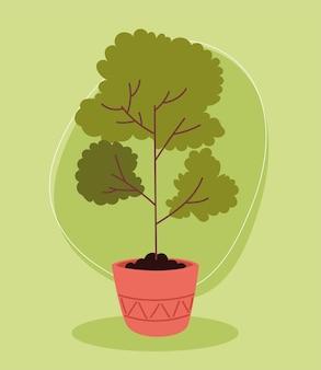 Комнатное растение дерево природа