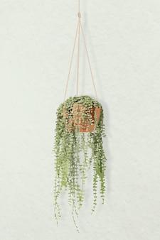観葉植物のベクトル画像、天使のつる鉢植えの家の室内装飾
