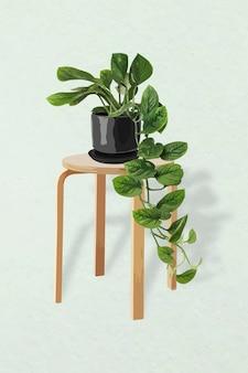 관엽 식물 벡터 이미지, 홈 인테리어 장식