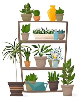 Комнатные растения и декоративные цветы в горшках на полках.