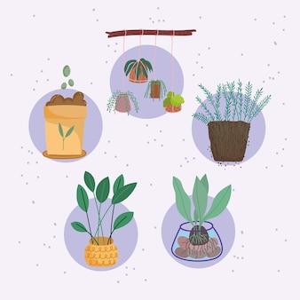 観葉植物と肥料のセット