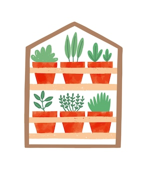Houseplants in ceramic pots flat illustration.