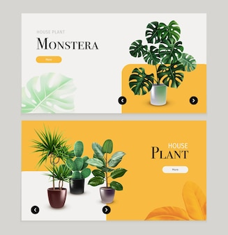 Houseplants horizontal banners with monstera, cactus and other exotic plants in flowerpots