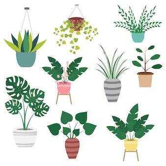 Комнатные растения в горшках декоративный набор на белом фоне. домашняя коллекция комнатных растений. векторная иллюстрация
