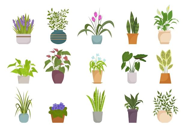 Набор комнатных растений в горшках.