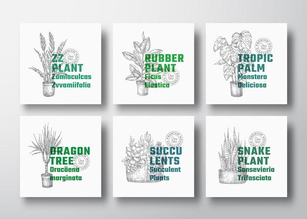 観葉植物ラベルテンプレートコレクション。手描きの鉢植えのドラセナ、モンステラなど。現代のタイポグラフィによるスケッチ。