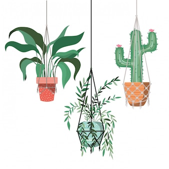 Houseplants on macrame hangers icon