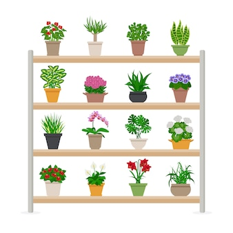 Houseplants on shelves illustration