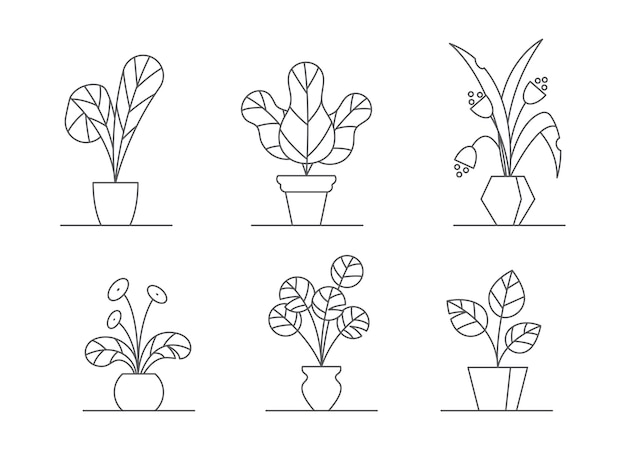 Houseplants vector illustration set - outline indoor flowers in pots with leaves and bloss