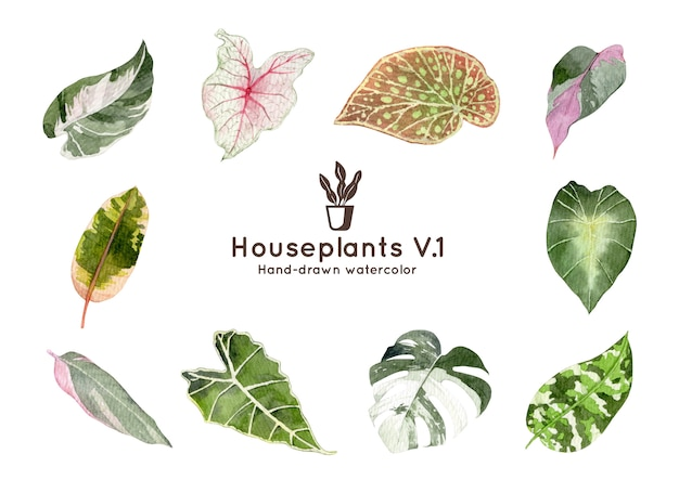 Houseplants watercolor illustration
