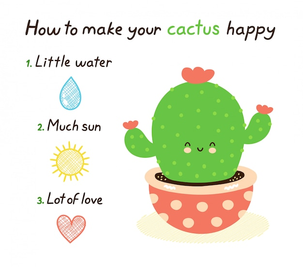 How to make your cactus happy.