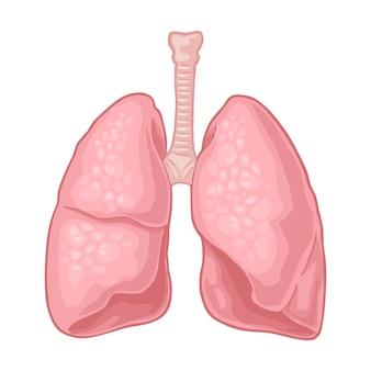 인체 해부학 폐. 벡터 색 평면 그림 흰색 배경에 고립입니다. 레이블, 포스터, 웹, 포스터, 정보 그래픽에 대한 손으로 그린 디자인 요소입니다.