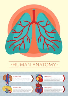 Human anatomy medical poster template with internal organs