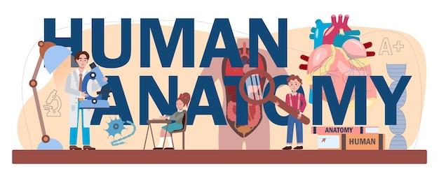 人体解剖学の活版印刷ヘッダー。人間の内臓の研究。解剖学と生物学の教科。人体システム。分離されたフラットベクトル図