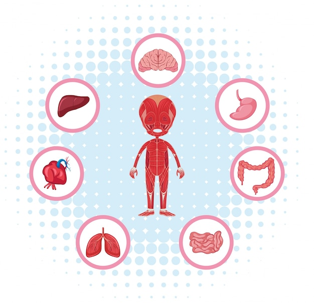 포스터에 다른 장기와 인체 해부학