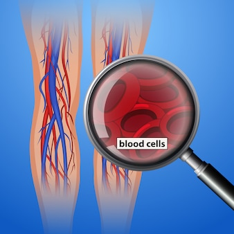 Human antomy blood cells