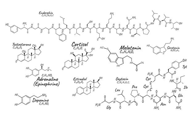 人間の大きなセットホルモンの概念化学骨格式アイコンラベル、テキストフォントベクトルイラスト、白で隔離。周期表。健康的なライフスタイルの内分泌系。