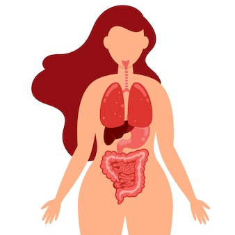 Human body health care infographics of lungs, digestive tract, large intestine, liver and stomach