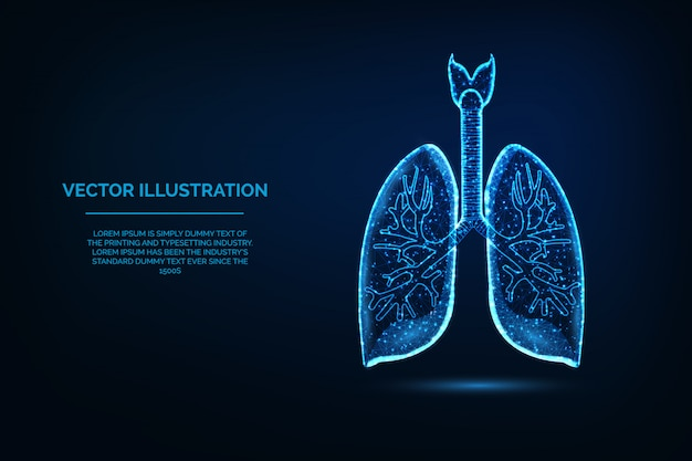 Полигональные иллюстрации легких органов человеческого тела