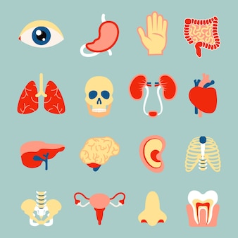 Органов человеческого тела